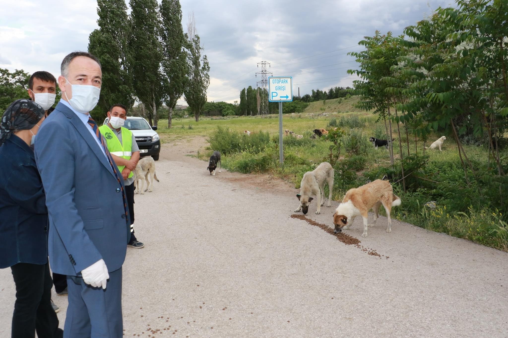 Belediye  Başkanımız Sokak Hayvanlarına Yem Bıraktı